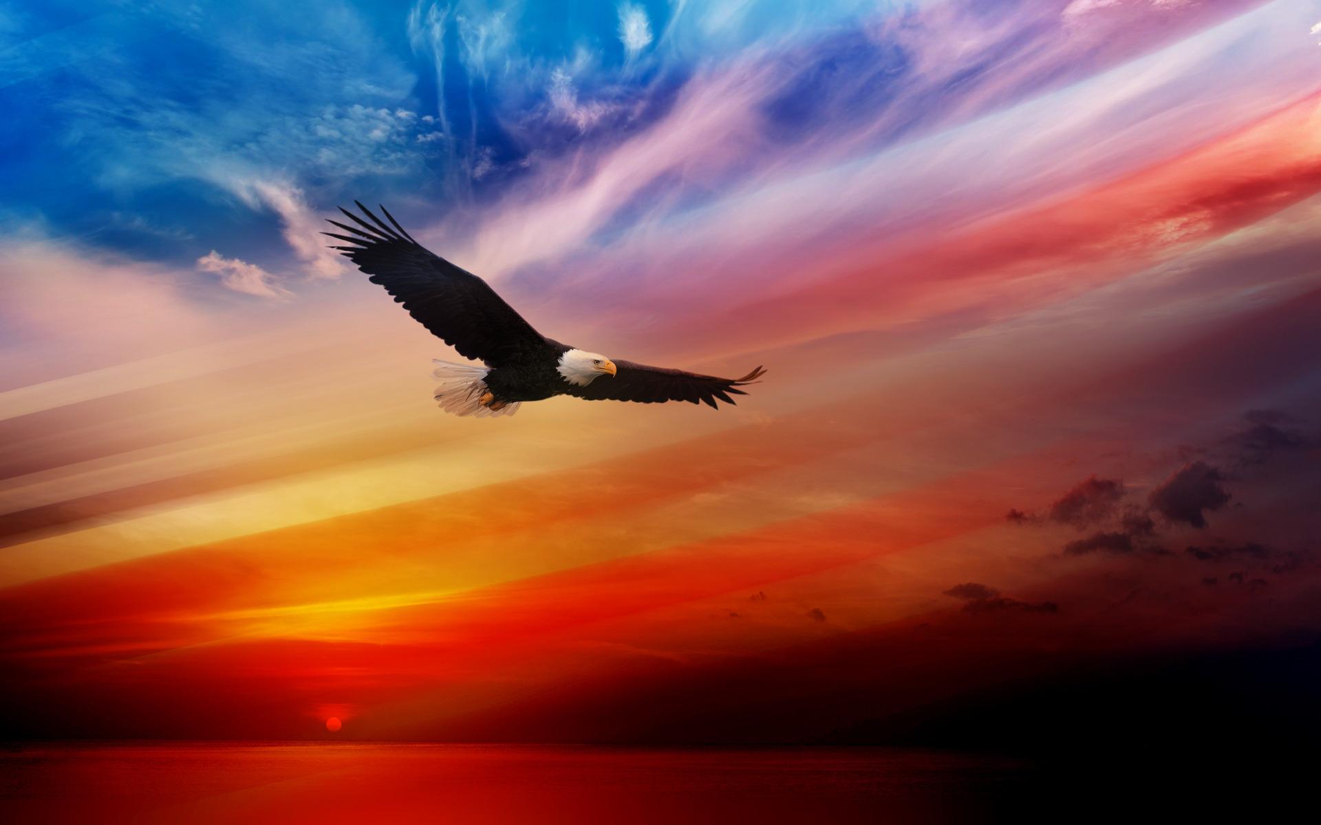 American-Eagles-Wallpaper